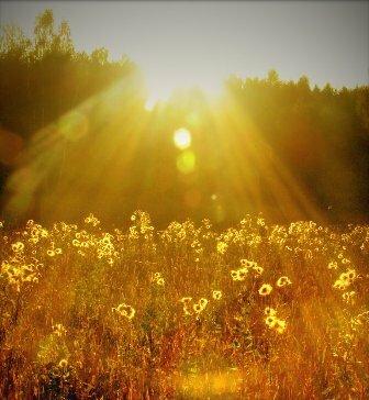 Рослини поділяються на світлолюбні